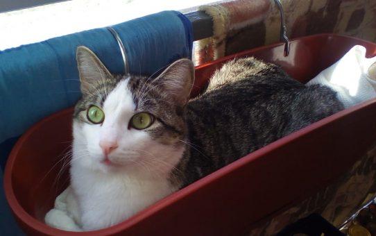 Наш кот Васюся
